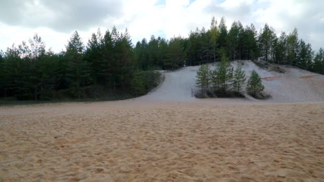 den liggande skottet av piusa skogen och vita - fur bildbanksvideor och videomaterial från bakom kulisserna