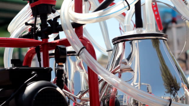 the latest milking equipment for the cows - lattaio video stock e b–roll