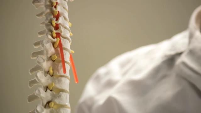 La mise en page des vertèbres de la colonne vertébrale humaine, le close-up, le médecin montre qu'il - Vidéo