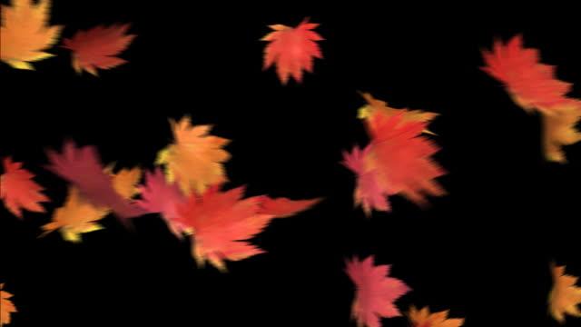 리프 춤을-hd 1080 루프 포함 - leaf 스톡 비디오 및 b-롤 화면