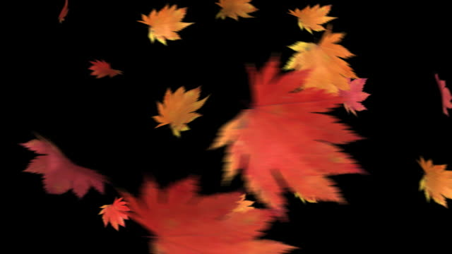 The leaf to dance-HD 1080 loop+alpha The leaf to dance-HD 1080 loop+alpha fall stock videos & royalty-free footage