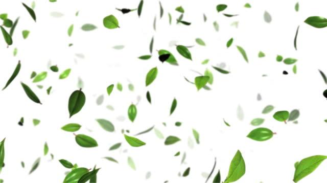 The leaf to dance-HD LOOP  green leaf stock videos & royalty-free footage