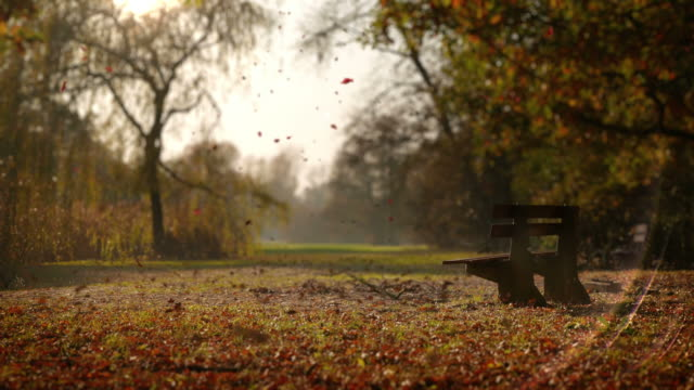 The leaves fall in autumn park. Lonely bench video