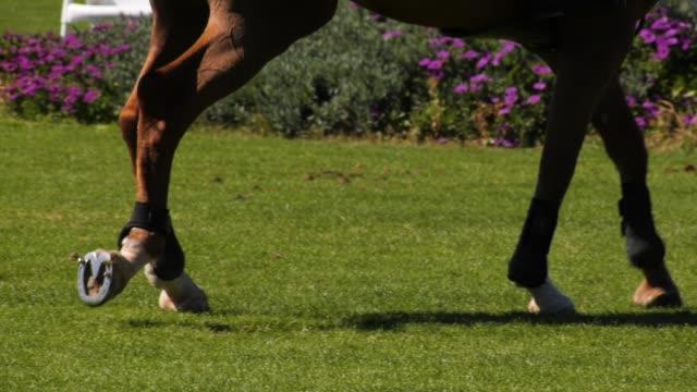 the legs of a horse - одно животное стоковые видео и кадры b-roll
