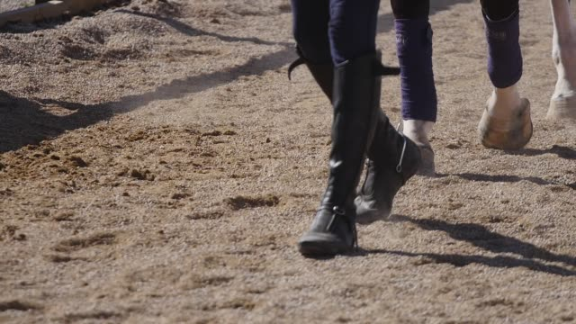 The legs of a horse The legs of the galloping horse international match stock videos & royalty-free footage