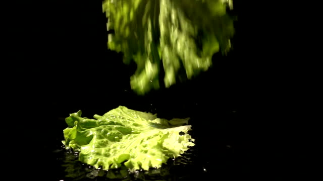 The Lettuce Leaves Are Falling video