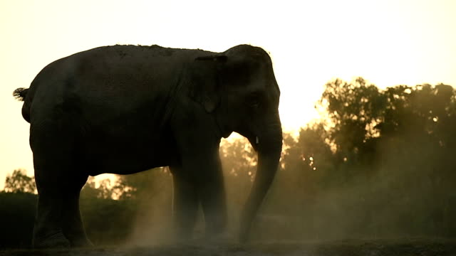 The life of Asian elephant video