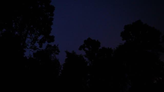 閃電和熱帶森林 - lightning 個影片檔及 b 捲影像