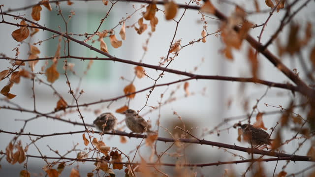 The little sparrow perched on a branch that was jumping around for joy.