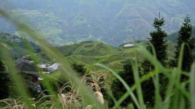 the longji rice terraces - longji tetian filmów i materiałów b-roll