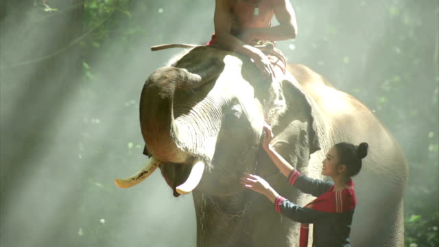 The mahout and woman video