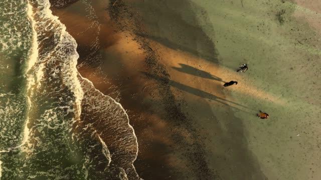 der mann und die frau spielt mit dem hund am meeresstrand im winter - beschleunigte hyperlapse-ähnliche video-footage - ostsee stock-videos und b-roll-filmmaterial
