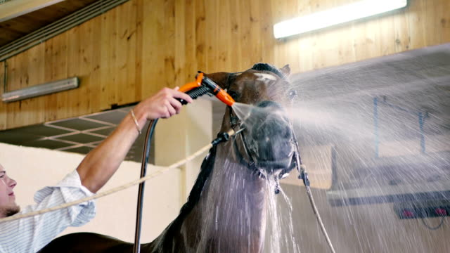 The man cleaning the head horse video