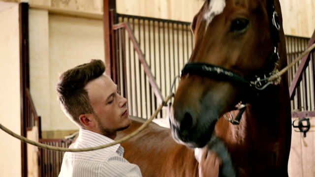 The man cleans a horse body video