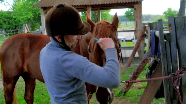 The man comb the mane of a brown horse video