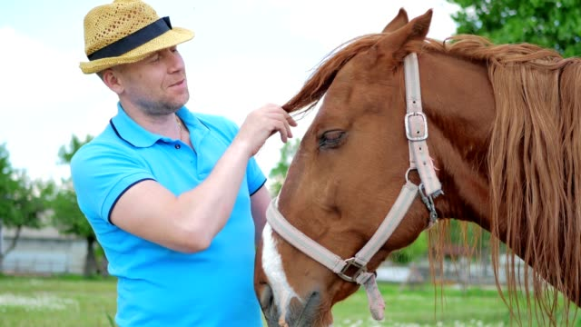 The man in hat caress the horse by the muzzle on meadow video