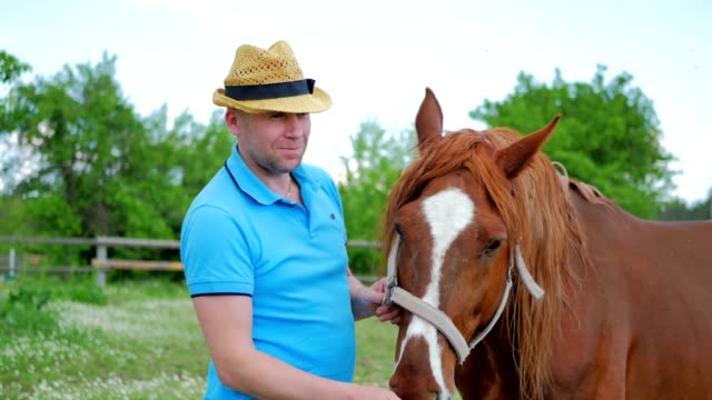 The man in hat feed a brown horse with flowers on the meadow video