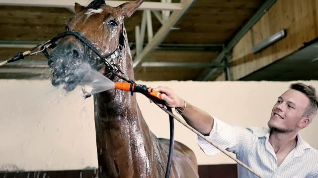 the man is cleaning a horse - скаковая лошадь стоковые видео и кадры b-roll