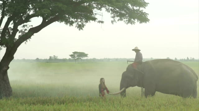 The man mahout and woman with elephant video