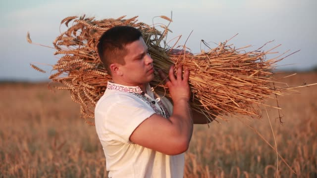 The man squints wheat A man takes a sheaf of wheat HD belarus stock videos & royalty-free footage