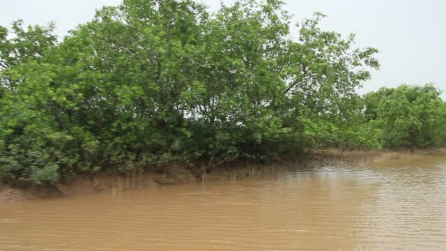 The mangrove scene in Southeast Asia The mangrove scene in Southeast Asia southeast stock videos & royalty-free footage