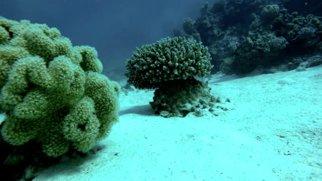The marine life of tropical fish. Coral reef. Tropical sea and coral reef. video