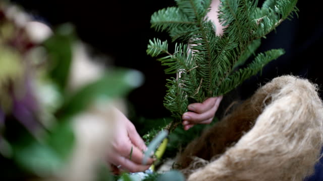 The master class florist clears fir branch of needles for plant pots video