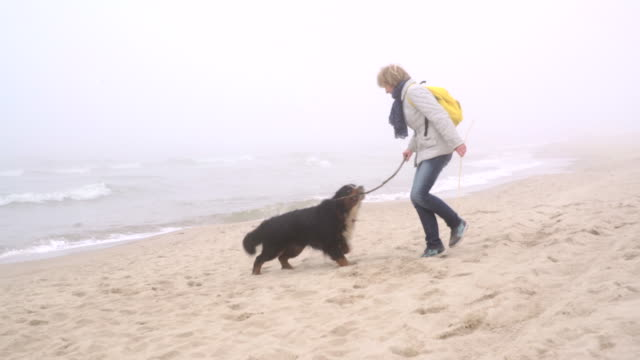 The mature 50-years-old woman playing with the Belgian mountain dog at the beach video