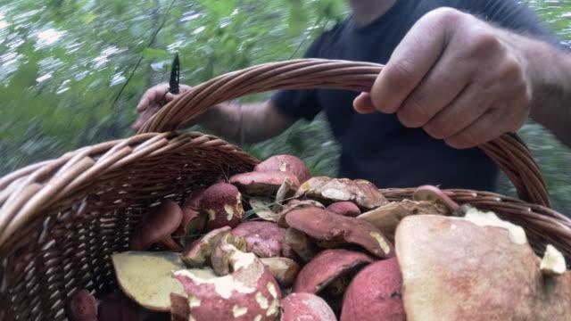 den mogen man samla svamp i de appalachian skog i poconos, pennsylvania - höst plocka svamp bildbanksvideor och videomaterial från bakom kulisserna