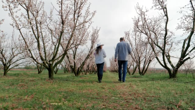 the modern farmer, slow motion of a young cheerful entrepreneurs walking in an orchard, using digital tablet. springtime, agricultural occupation, small business, investment, innovation, woman leader working, using technology, outdoors. - orticoltura video stock e b–roll