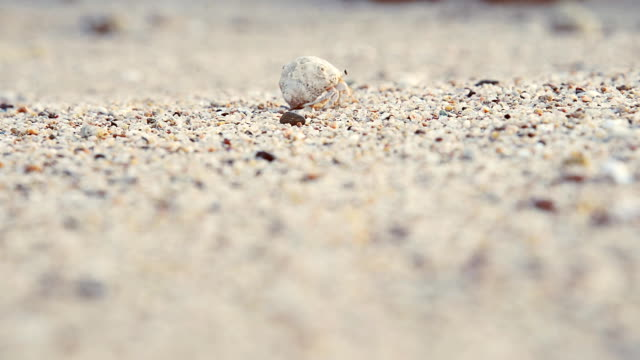 The mollusc crawls along the sand in the sea video