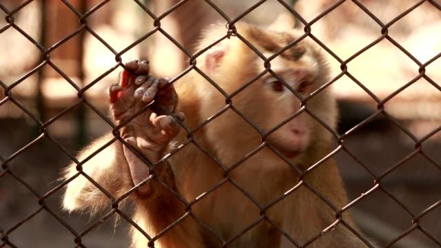 maymunlar gündüz çimento yere otur. hayvanat bahçesi, kafes yaşıyorum. - makak maymunu stok videoları ve detay görüntü çekimi