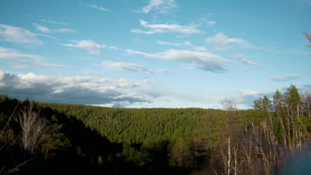 förslaget till solen och flimmer över skogen - städsegrön växt bildbanksvideor och videomaterial från bakom kulisserna