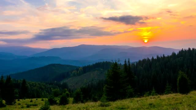 berg skogen på bakgrund av sunset - städsegrön växt bildbanksvideor och videomaterial från bakom kulisserna
