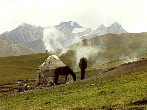 die mountain viehweide. - hengst stock-videos und b-roll-filmmaterial