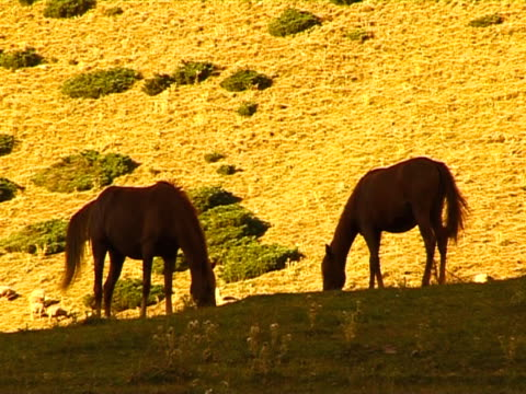 die mountain viehweide. - pferdeartige stock-videos und b-roll-filmmaterial