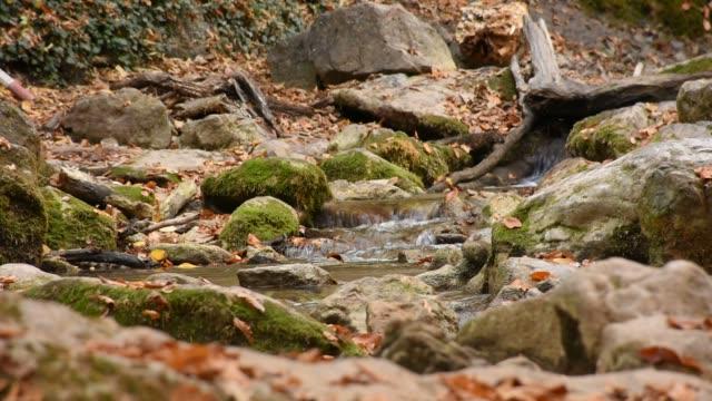 vídeos de stock, filmes e b-roll de o murmúrio da água em um rio de montanha com folhas de outono - penedo