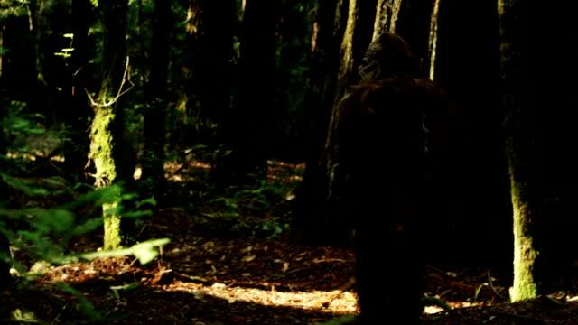 il misterioso bigfoot wandering profondo della foresta di redwood. - yeti video stock e b–roll