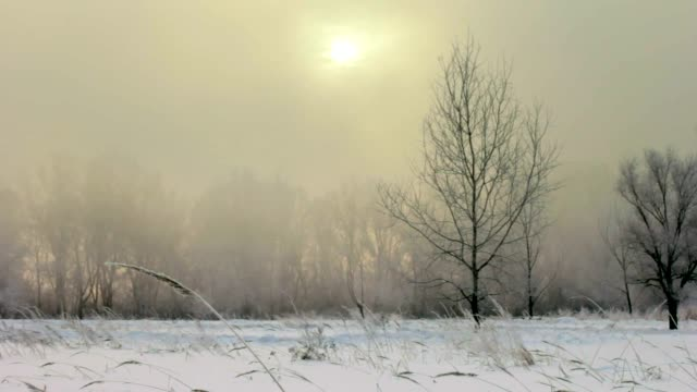 The mystical fog in the winter in the field video