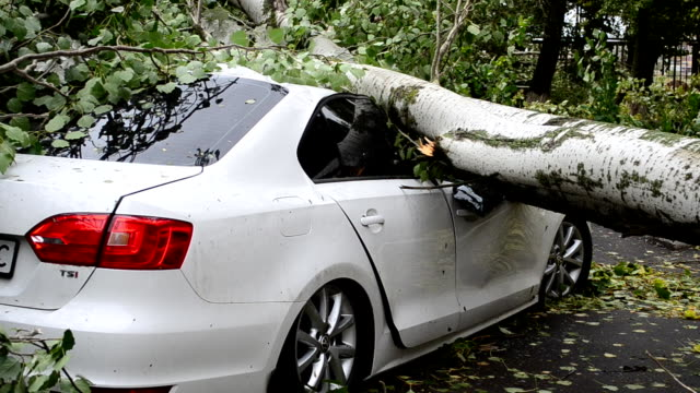 den nya bilen bryts helt av en orkan. - skada bildbanksvideor och videomaterial från bakom kulisserna