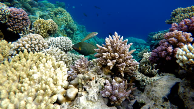 The ocean and the corals. Colorful tropical fish.  Beautiful corals. Tropical sea and coral reef.  Coral reef. coral cnidarian stock videos & royalty-free footage