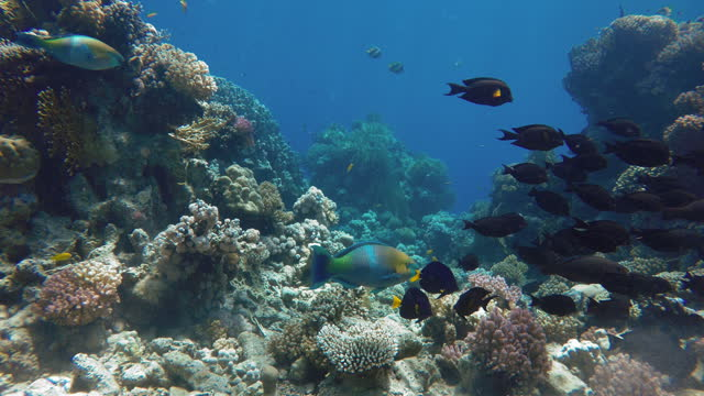 The ocean and the corals. Colorful tropical fish.  Beautiful corals. video