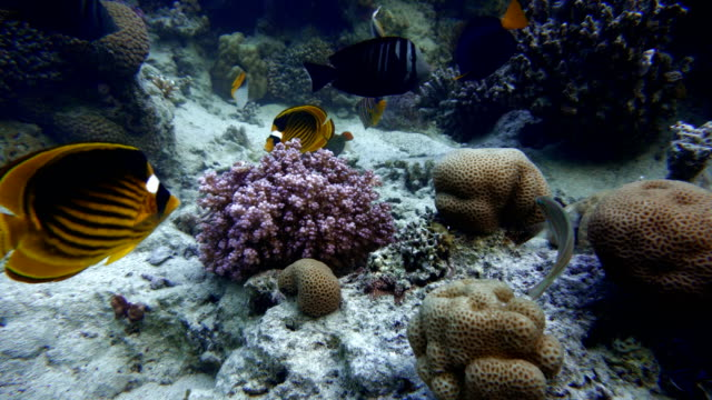 The ocean and the corals. Colorful tropical fish. video