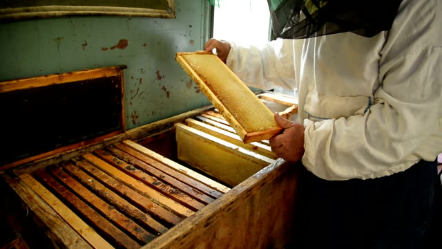 The old beekeeper is holding a frame with honeycomb and honey in the room where frames with wax and honey are stored