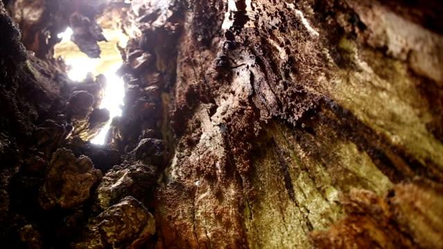 千年間古いオークの木 - 中林大樹点の映像素材/bロール