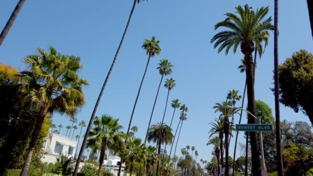 vídeos y material grabado en eventos de stock de las palmeras de beverly hills - fotografía de viaje - rodeo