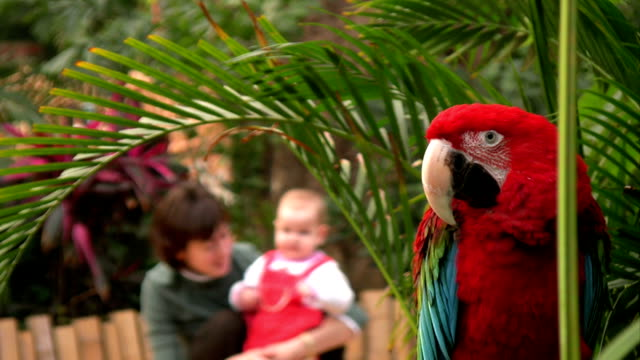 The parrot video
