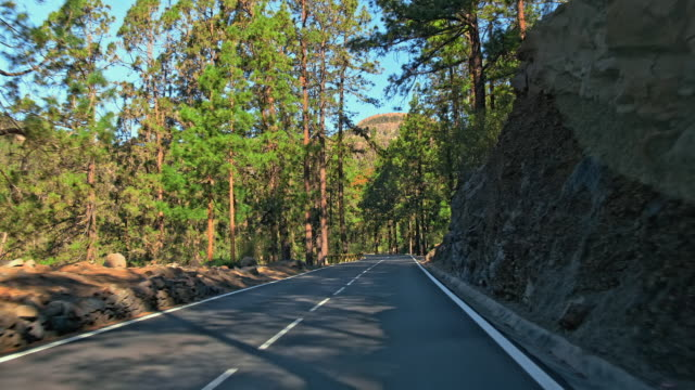 the perfect asphalt mountain road. fresh painted road markings. rocky roadside, and green coniferous trees in the background. the concept of travelling by car to the mountains - дворец спорта стоковые видео и кадры b-roll