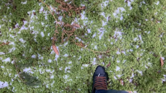 The person walks in sneakers on the frozen The frozen green moss, ice, snow, jeans trousers, blue color