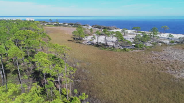 The pine forest on the Atlantic coast in North Florida, USA. Aerial drone video with the cinematic forward camera motion.